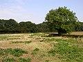 Moordales Plantation - geograph.org.uk - 237769.jpg