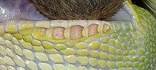 wiki schlangenbuch kinder erkennt eine schlange ihre umwelt