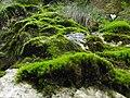 Moss - panoramio (3).jpg