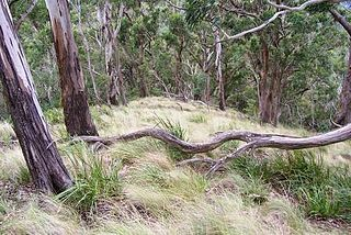 Mount Royal National Park Protected area in New South Wales, Australia