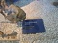 Museo de Ciencias Naturales de Valencia AC 01.JPG