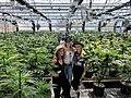My 420 Tours Cannabis Greenhouse.jpg