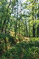 Národní přírodní památka Kleneč 03.jpg