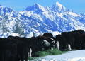 NRCSWY02019 - Wyoming (6903)(NRCS Photo Gallery).tif