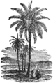 NSRW Date Palm.png