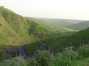 Nahal Tavor - Nahal Tavor looking south-east, lupines in the foreground