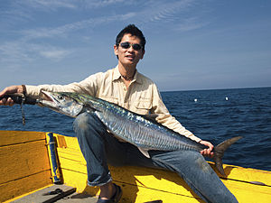 Another nice spanish mackerel caught from the ...