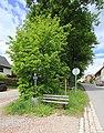Naturdenkmal Lindenallee in Lößnitz Erzgebirge 2H1A2664WI.jpg