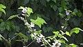 Nature A01.jpg