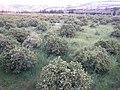 Nature des Monts Beni Chougranes Mohammadia 38.jpg