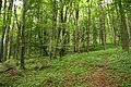 Nature reserve Žižkův vrch in summer 2012 (2).JPG