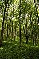 Nature reserve Žižkův vrch in summer 2012 (7).JPG