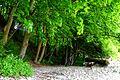 Naturschutzgebiet Granitz - Strand östlich von Binz (7).jpg