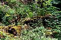 Naturschutzgebiet Saupark - Kleiner Deister - Totholz.jpg