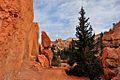 Navajo Loop Trail, Bryce Canyon National Park (3446245151).jpg