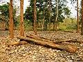 Nedumkayam Reserve Forest, Nilambur - panoramio (9).jpg
