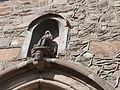 Niche avec statue au-dessus du portail.jpg