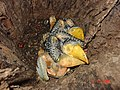 Ninho de Tucanos 3.jpg