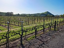 Vineyard - Wikipedia