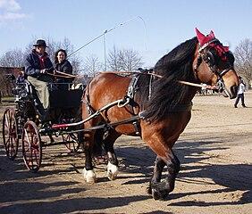 Norický kôň - ťažné plemeno koňa