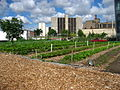 North view of a Chicago urban garden.jpg