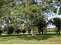 Northridge, Los Angeles, CA, USA - panoramio (77).jpg