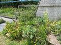 Nursery (14165963742).jpg