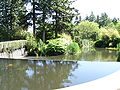 Occasions-Pond in Surrey, BC.jpg