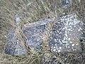 Old big graveyard, Angeghakot 32.jpg