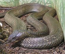 beneficiile gârbei de șarpe pentru pierderea în greutate naperville pentru pierderea în greutate ideală