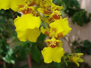 മലയാളം: Most of the orchids do not require soi...