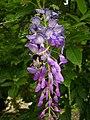 Orléans - parc floral (67).jpg