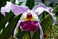Orquídea (25605465).jpeg
