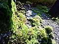 Otterbergian Moss - panoramio.jpg