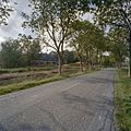 Overzicht vanaf de weg met zicht op de achterzijde van de schuren - 't Zandt - 20347655 - RCE.jpg