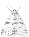 PSM V53 D682 Catocala moth at rest.png