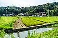 Paddy field in Wakayama City, Wakayama Prefecture; August 2016 (04).jpg