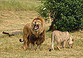 Pair of lions v2.jpg