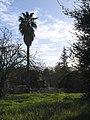 Palmtreefarm.jpg