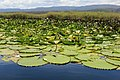 Pantanal de Marimbus na Chapada Diamantina.jpg