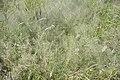 Parc national d'Etosha - la Savane 02.jpg