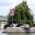 Paris 75001 Square du Vert-Galant Salix × sepulcralis 20120715.jpg