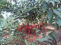 Parque de las Heliconias1.jpg
