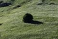 Pasture in Tamdere, Dereli 04.jpg