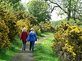 Path by Lindley Wood Reservoir - geograph.org.uk - 179420.jpg