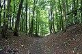 Path to Belas Knap through Humblebee Wood.jpg