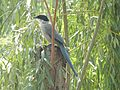 Peace Harmony Nature 30.JPG
