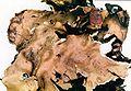 Peltigera canina-1.jpg
