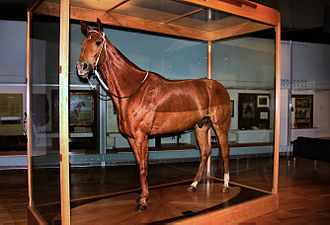 Phar Lap - Phar Lap's skin was preserved by Louis Paul Jonas and is now exhibited as a taxidermy mount by Melbourne Museum.