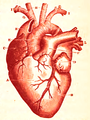 Physiology for Young People - 1884 - Heart (red).png